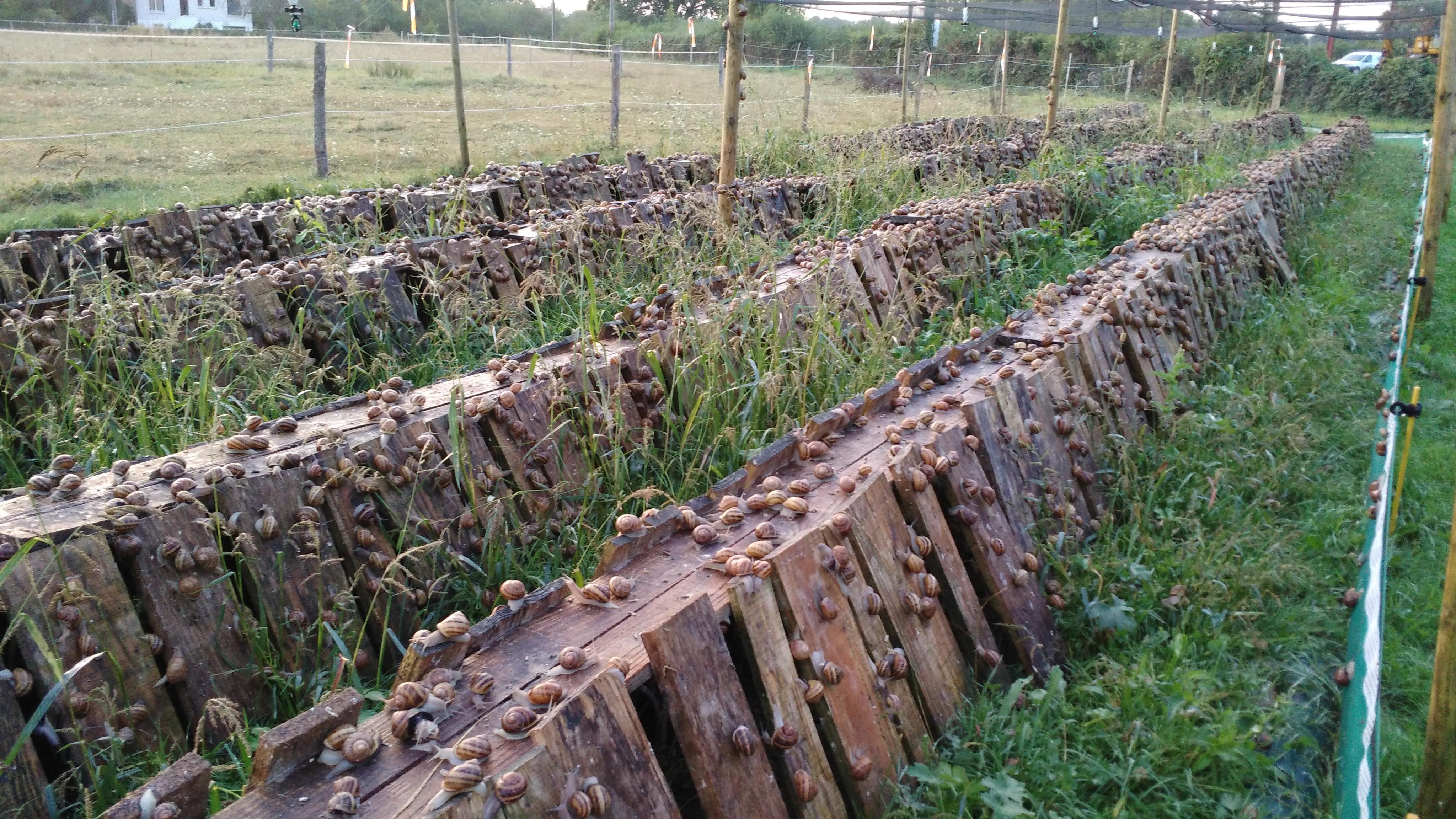 Élevage Escargots Autrement - Thionne destiné Elevage Escargot