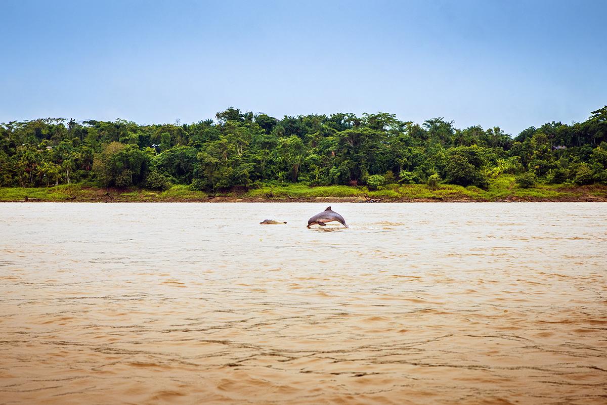 En Immersion Au Cœur De L'amazonie Colombienne - Rendez-Vous à Dauphin Amazonie