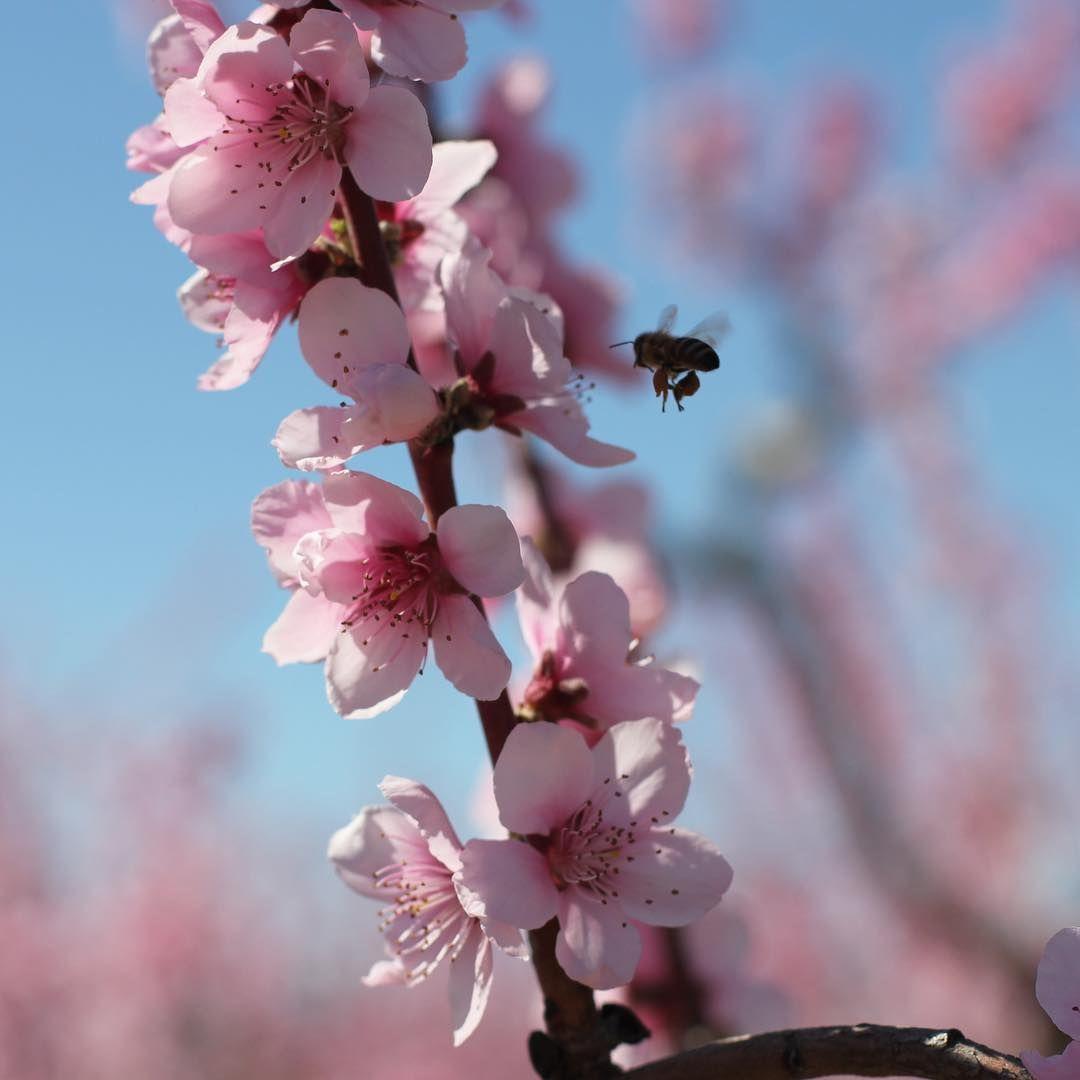 Épinglé Sur La Vie Au Rucher - Une Ruche En Provence intérieur Fleur Qui Pousse Au Printemps