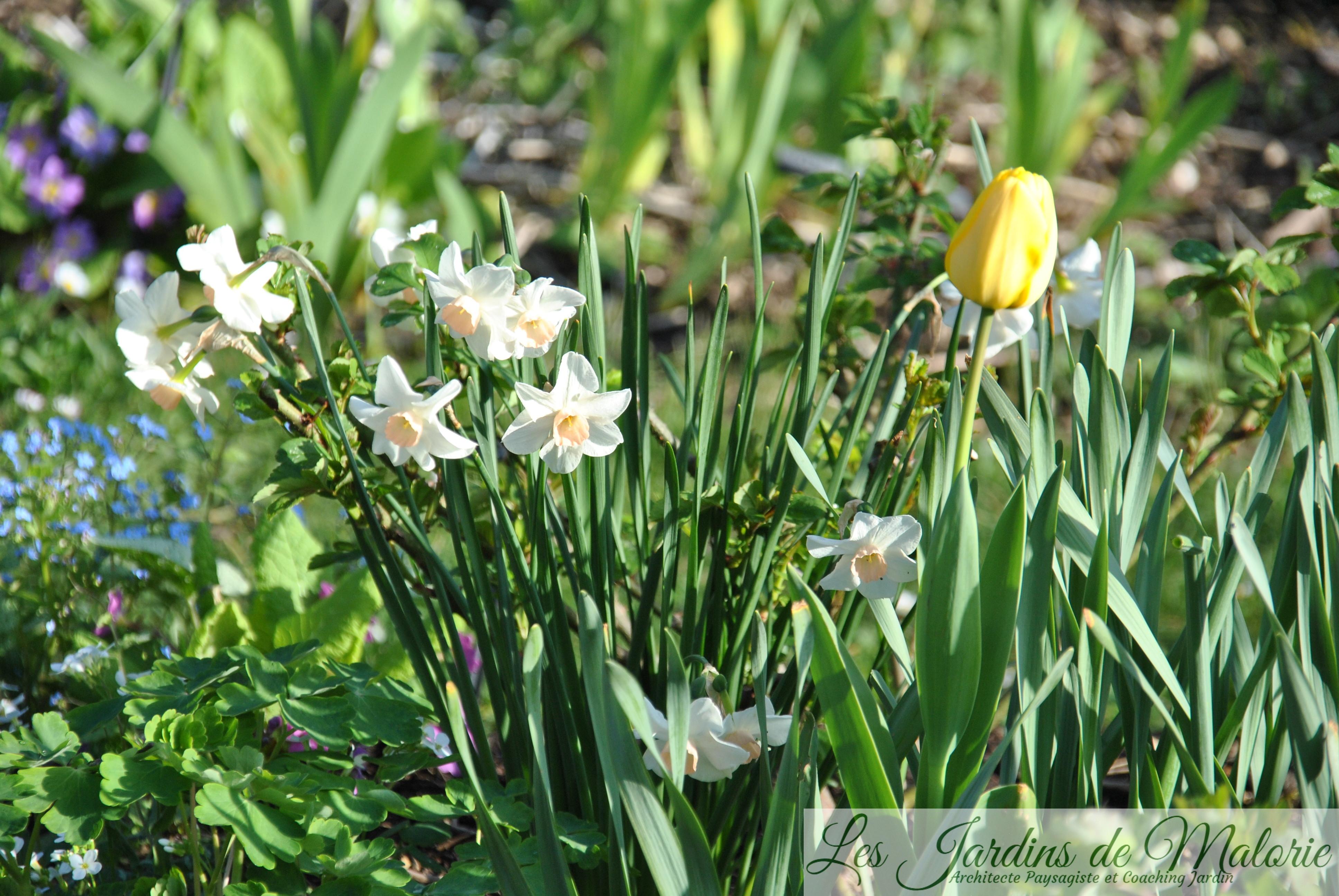 🌻 Fleurs Jaunes Du Début Du Printemps - Les Jardins De Malorie serapportantà Fleur Qui Pousse Au Printemps