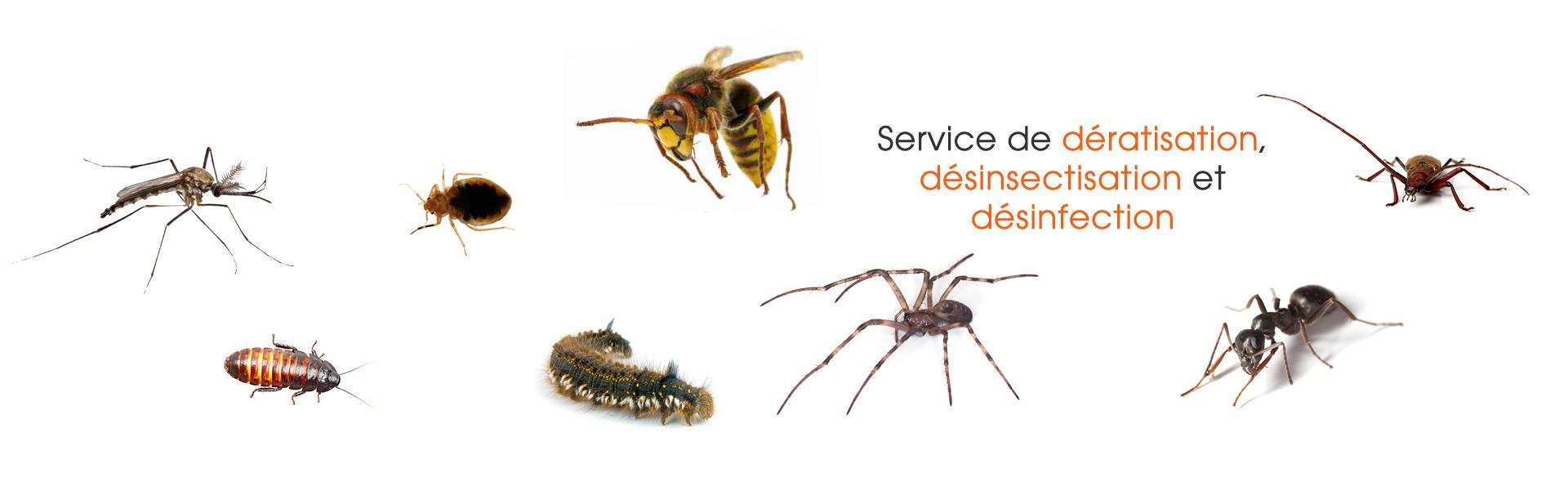 Fiches Descriptives Sur Les Insectes Nuisibles - encequiconcerne Les Noms Des Insectes