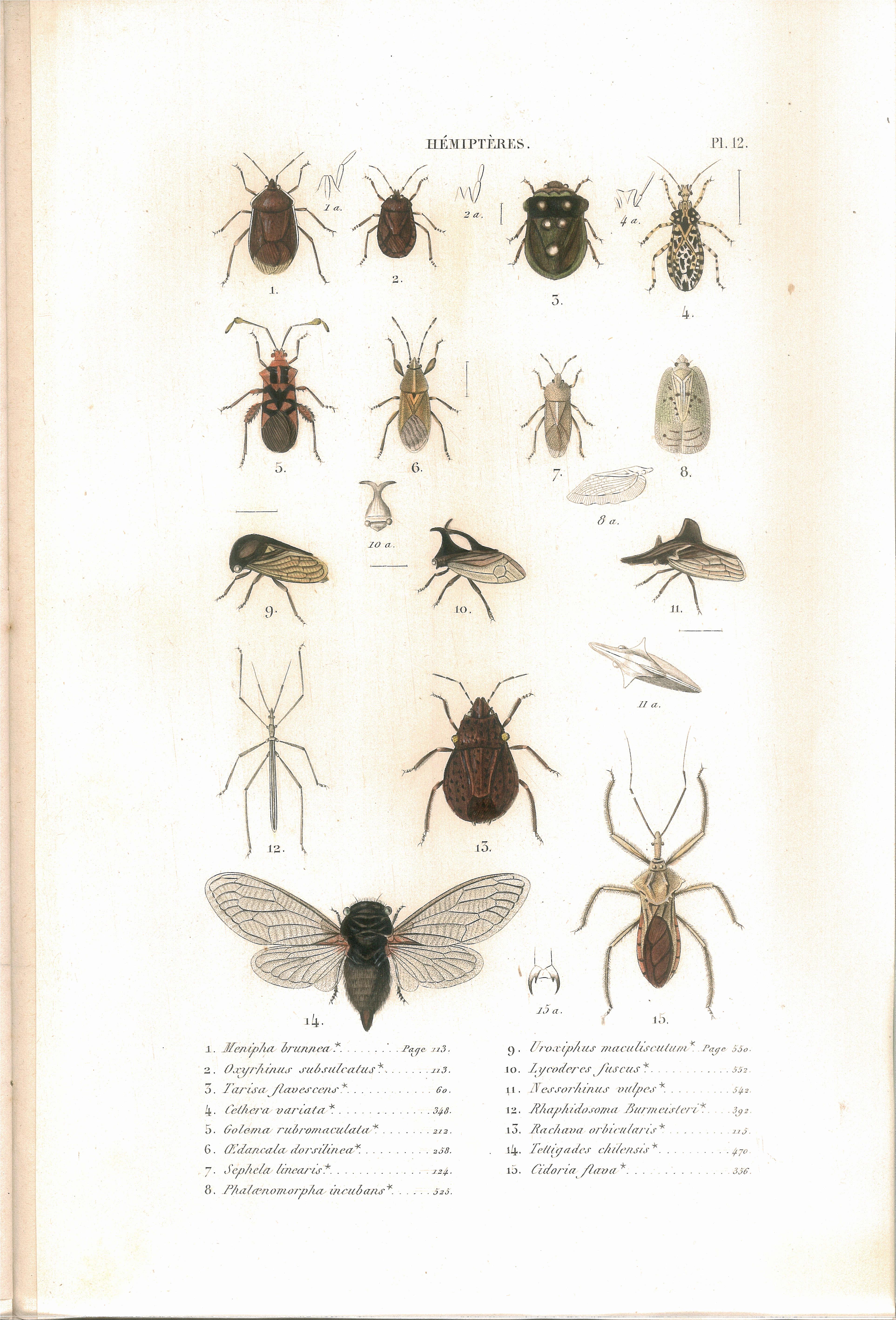 Fichier:amyot C.j.b.1843 Histoire Naturelle Des Insectes avec Les Noms Des Insectes