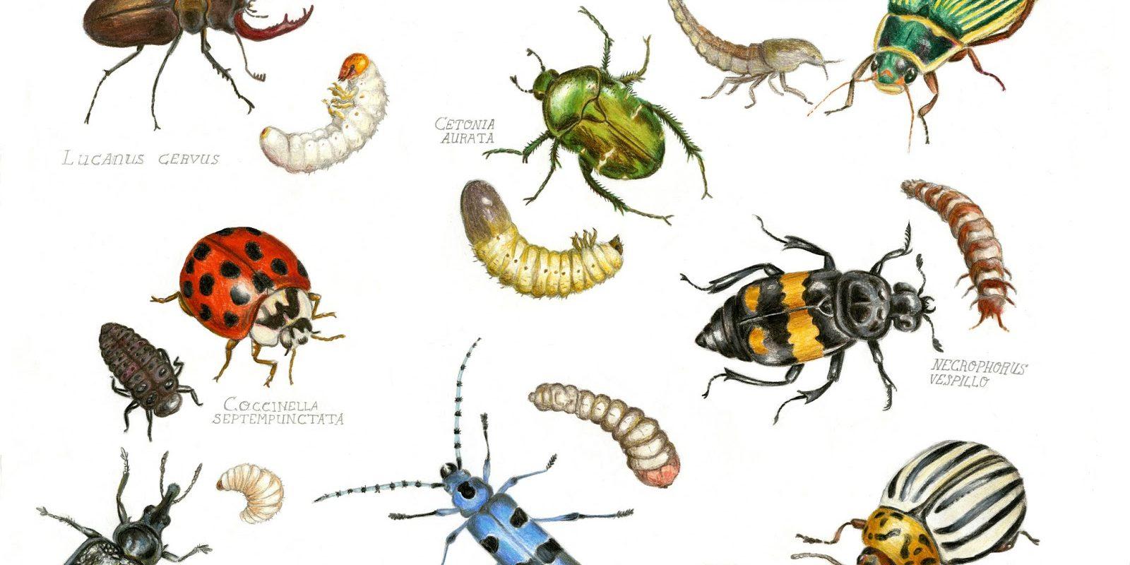 Fini Le Gaspillage Grâce Aux Insectes - Globalgoodness concernant Les Noms Des Insectes