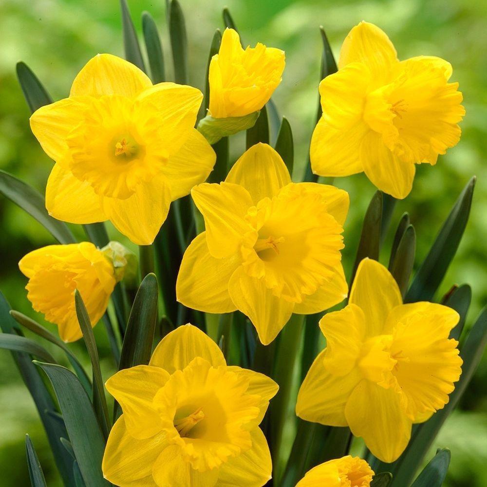 Fleurs De Saison – Lesquelles Fleurissent Au Printemps intérieur Fleur Qui Pousse Au Printemps