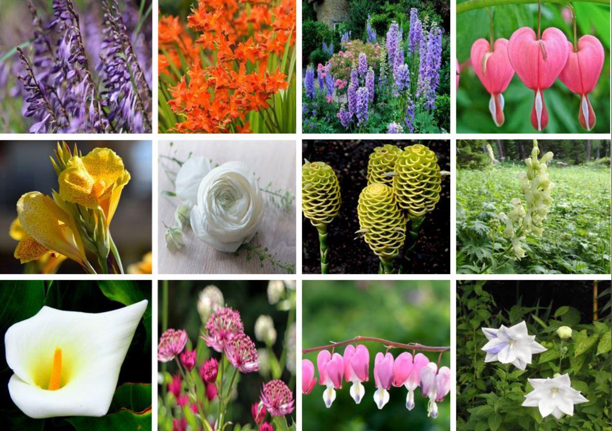 Fleurs D'été : La Liste Des 30 Plus Belles Variétés De tout Fleur Qui Pousse Au Printemps