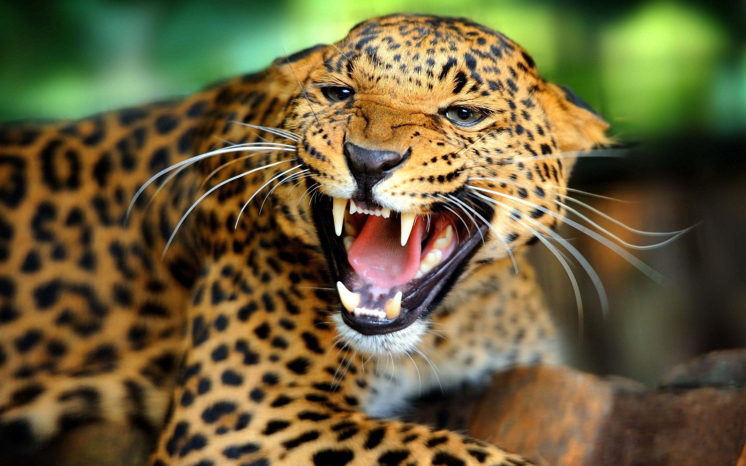 Fonds D'écran Animaux Sauvages Afrique - Maximumwall encequiconcerne Animaux Sauvages De L Afrique