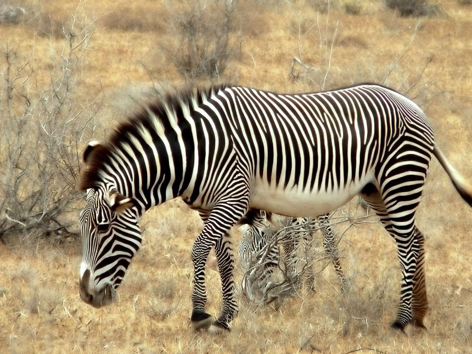 Fonds D'écran Animaux Sauvages Afrique - Maximumwall tout Animaux Sauvages De L Afrique