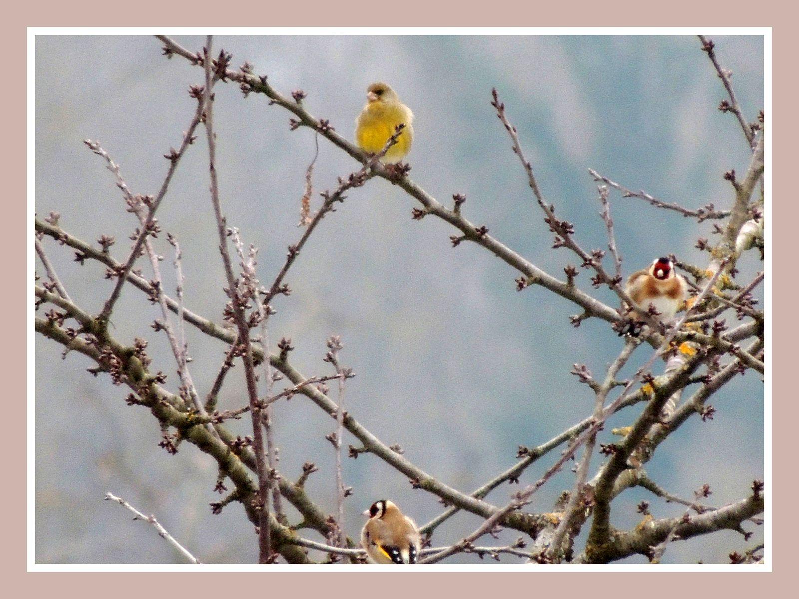Fonds D'écran Gratuits.oiseaux De Nos Jardins.par Jipé - Le encequiconcerne Images D Oiseaux Gratuites