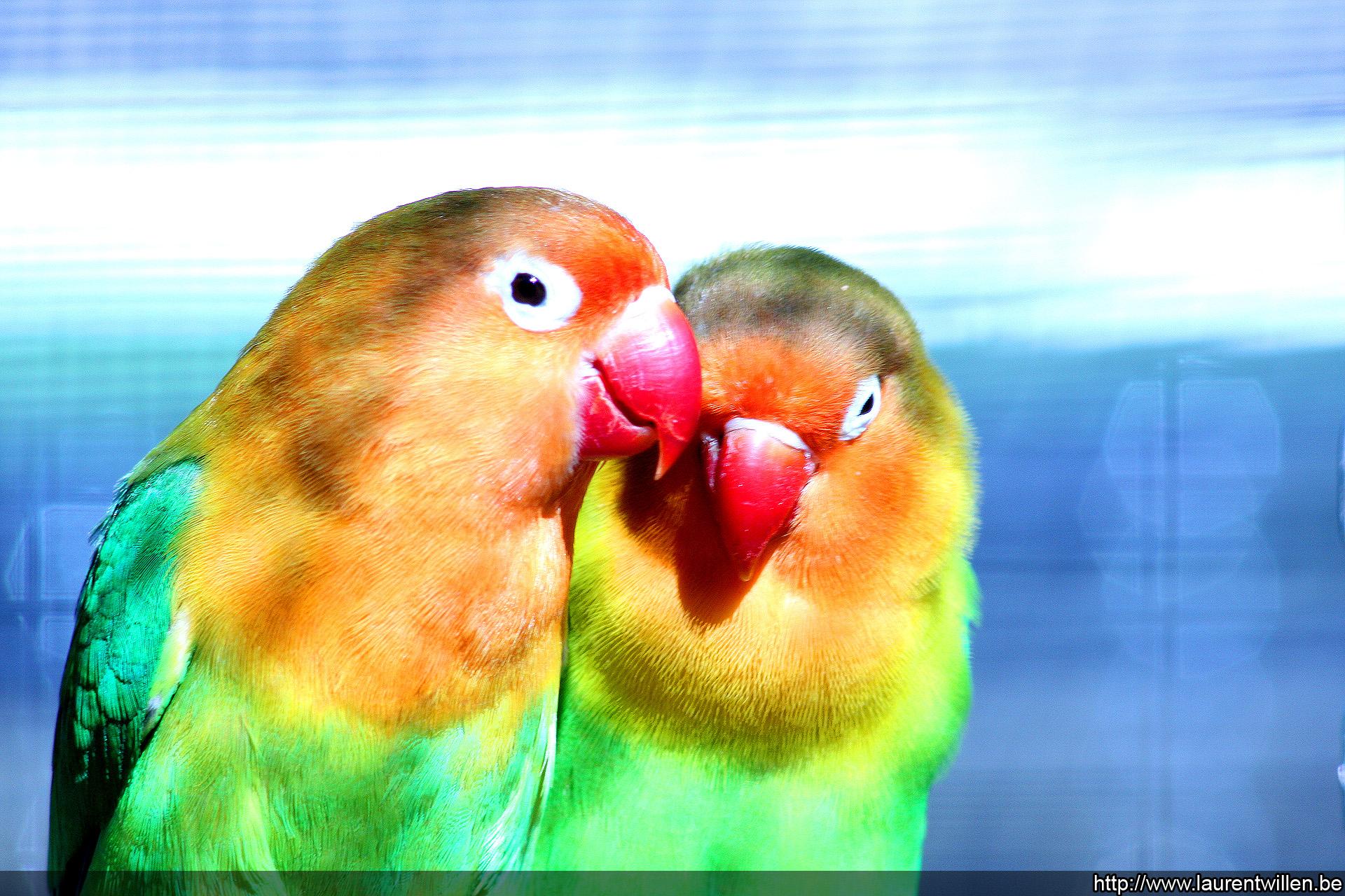 Fonds D'écran Gratuits: Oiseaux Exotiques concernant Images D Oiseaux Gratuites