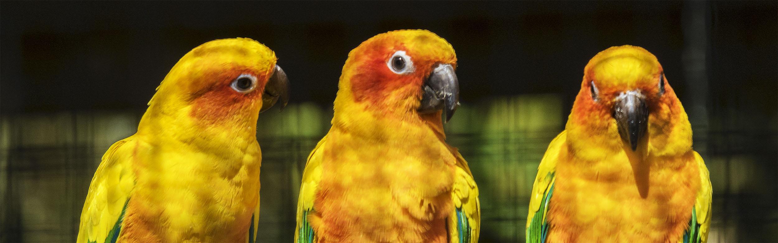 Fonds D'écran Gratuits: Oiseaux Exotiques tout Images D Oiseaux Gratuites