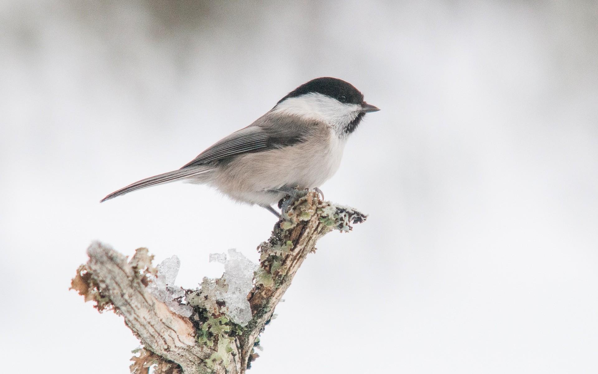 Fonds D'écran Oiseaux Gratuits intérieur Images D Oiseaux Gratuites