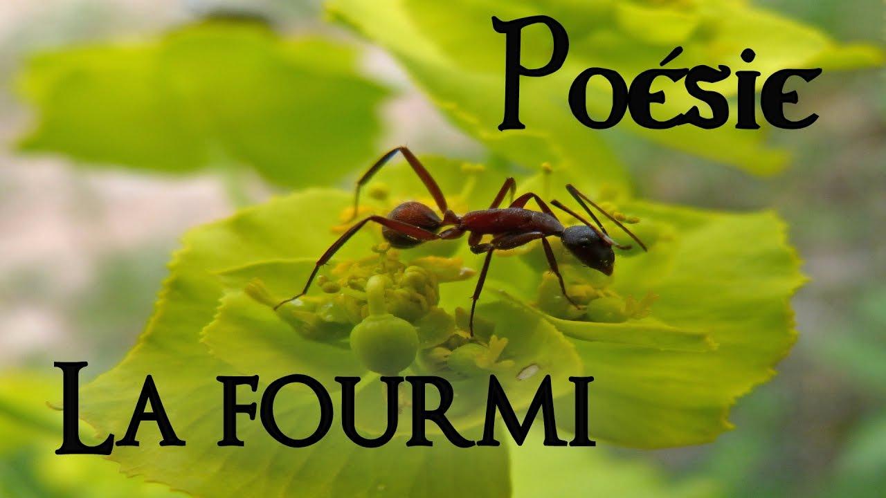 French Poem 🐜 La Fourmi By Robert Desnos 🐜 avec Poème De Robert Desnos