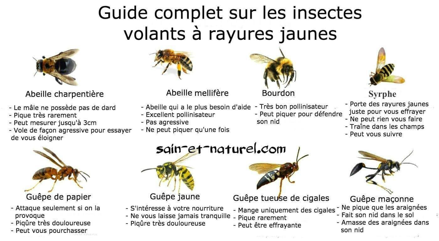 Guide Complet Sur Les Insectes Volants À Rayures Jaunes à Les Noms Des Insectes