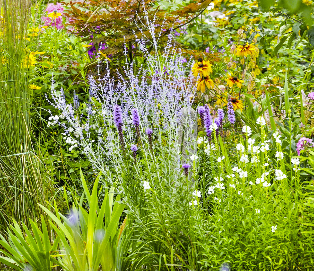 Haie Fleurie Toute L'année : Arbuste À Fleur Et Graminées pour Fleur Qui Pousse Au Printemps