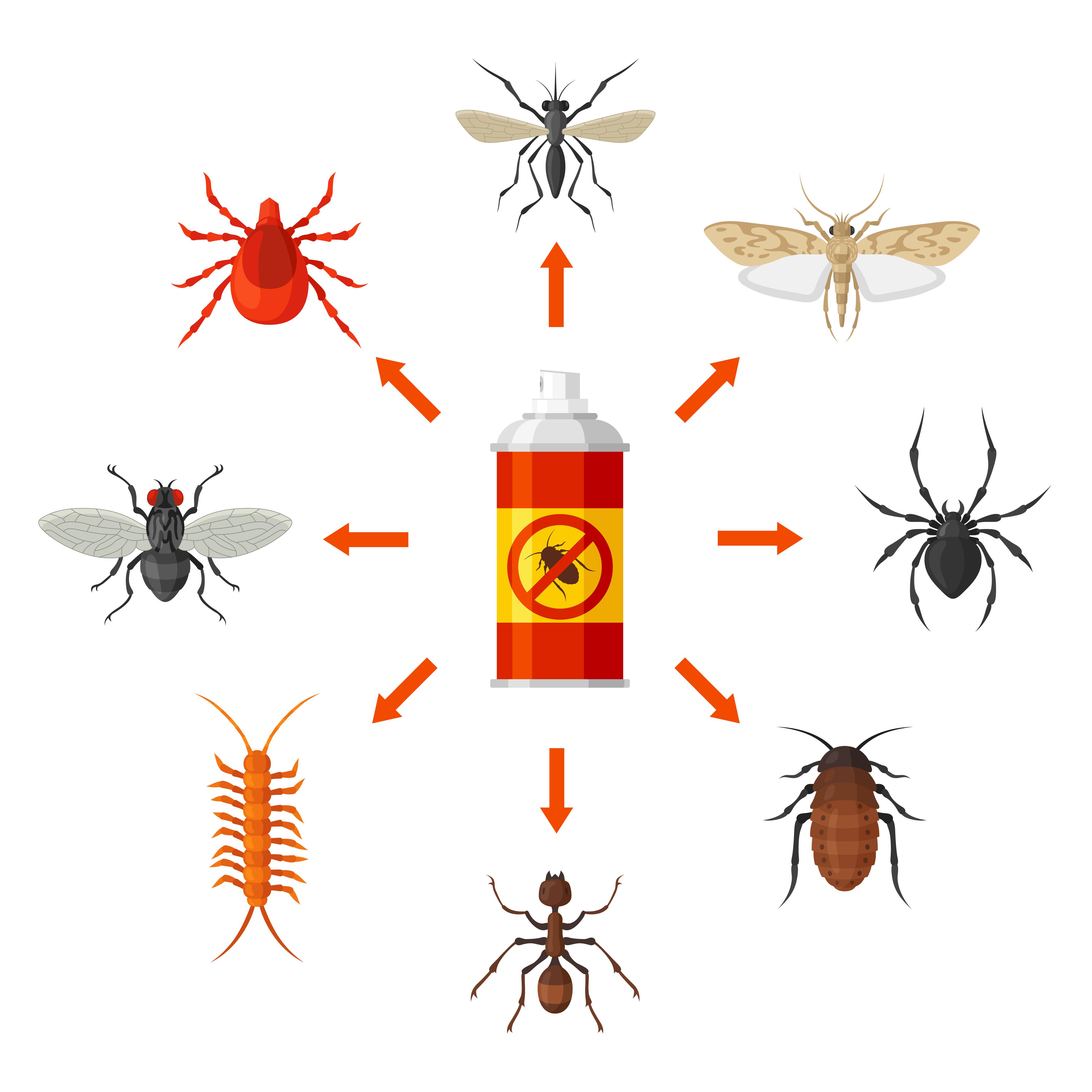 Identifier Un Insecte De Maison | Guide D'insectes Du Québec serapportantà Les Noms Des Insectes