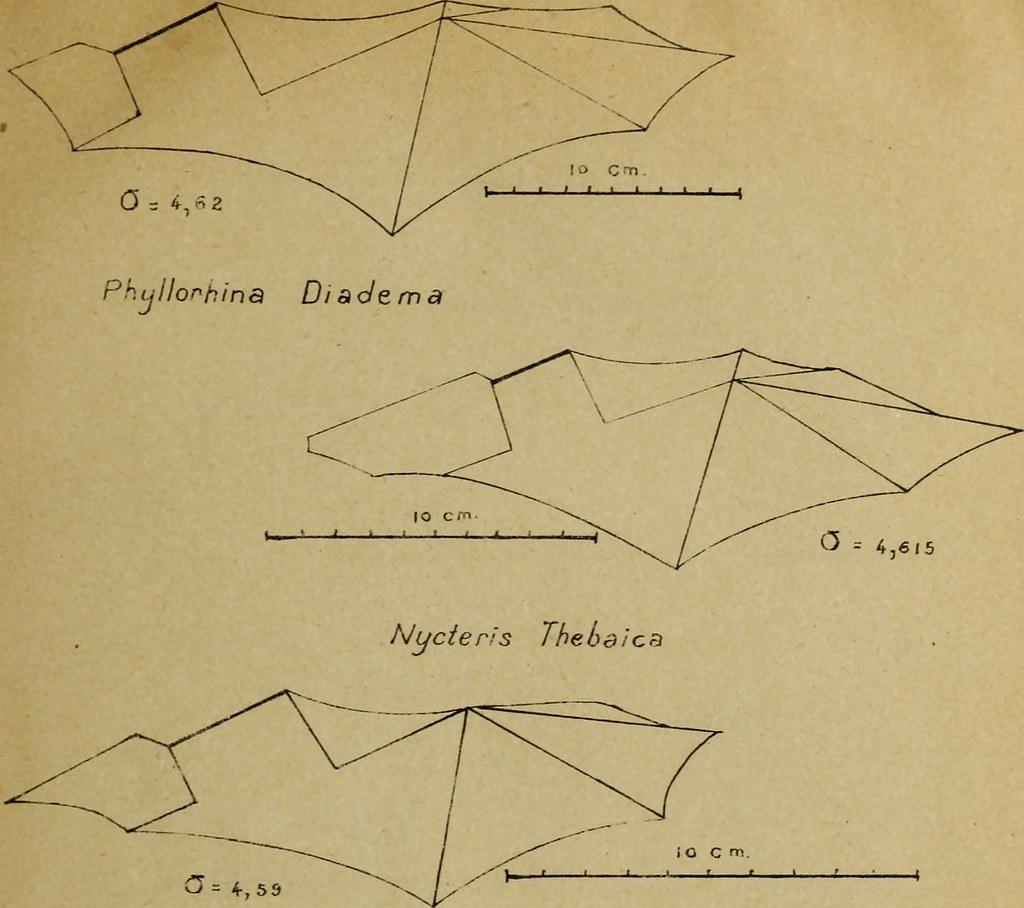 """Image From Page 16 Of """"considérations Sur Une Chauve-Sour intérieur Origami Chauve Souris"""