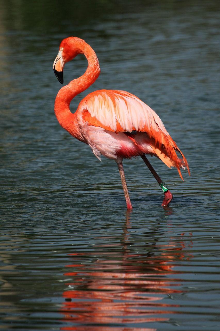 Image Gratuite Sur Pixabay - Afrique, Des Animaux, Bec destiné Images D Oiseaux Gratuites
