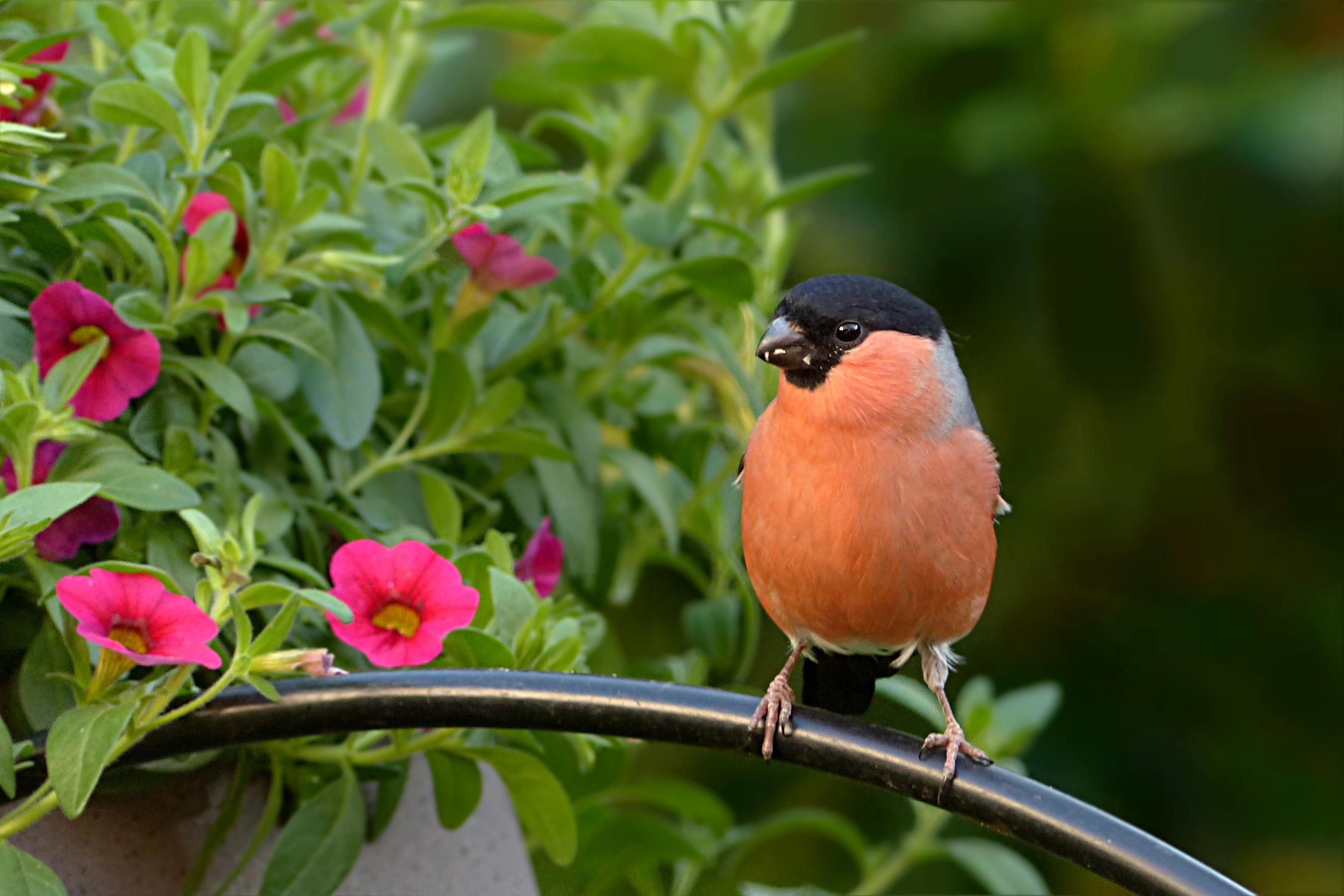 Images Gratuites : Oiseaux, Oiseau | Images Gratuites Et pour Images D Oiseaux Gratuites
