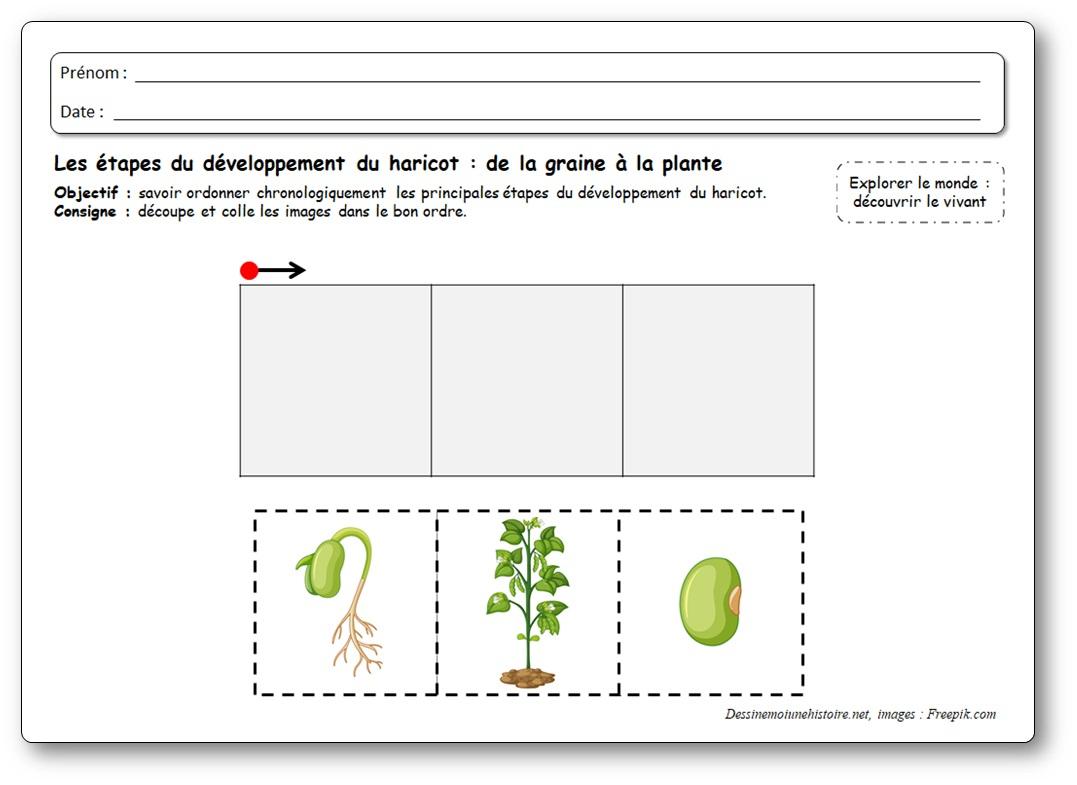 Images Séquentielles : De La Graine À La Plante De Haricot concernant Images Séquentielles Maternelle