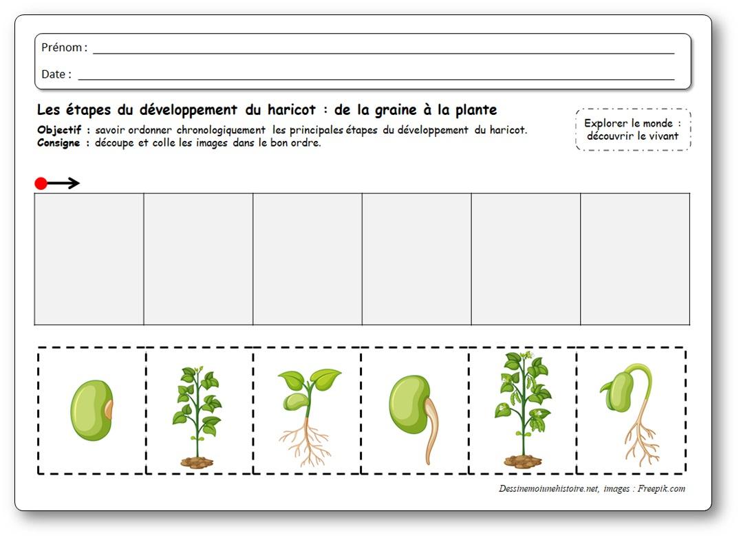 Images Séquentielles : De La Graine À La Plante De Haricot intérieur Images Séquentielles Maternelle