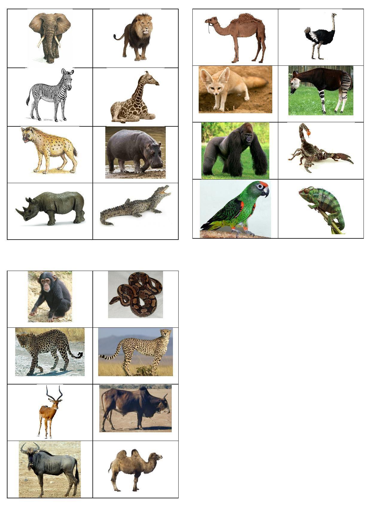 Imagiers | Imagier Animaux, Animaux Afrique, Animaux Du Zoo pour Animaux Sauvages De L Afrique