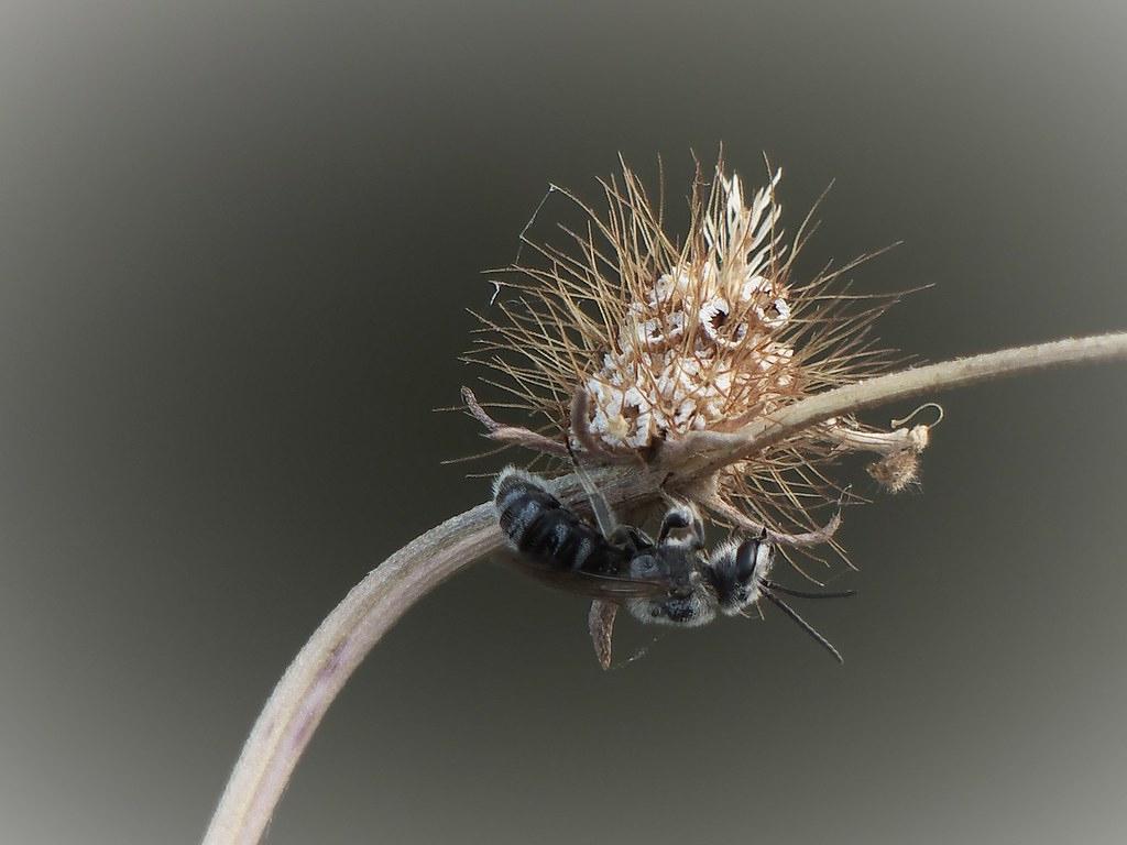 Insecte Dont Je Ne Connais Pas Le Nom | Doume Piazzolli | Flickr dedans Les Noms Des Insectes