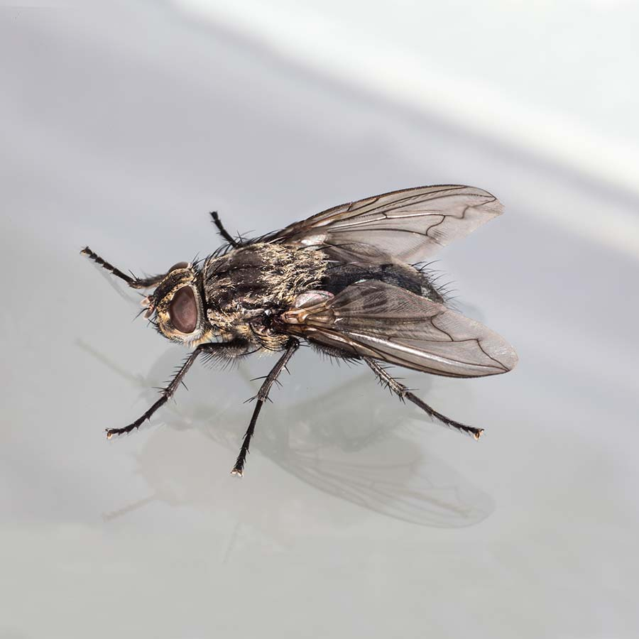 Insectes Volants serapportantà Les Noms Des Insectes