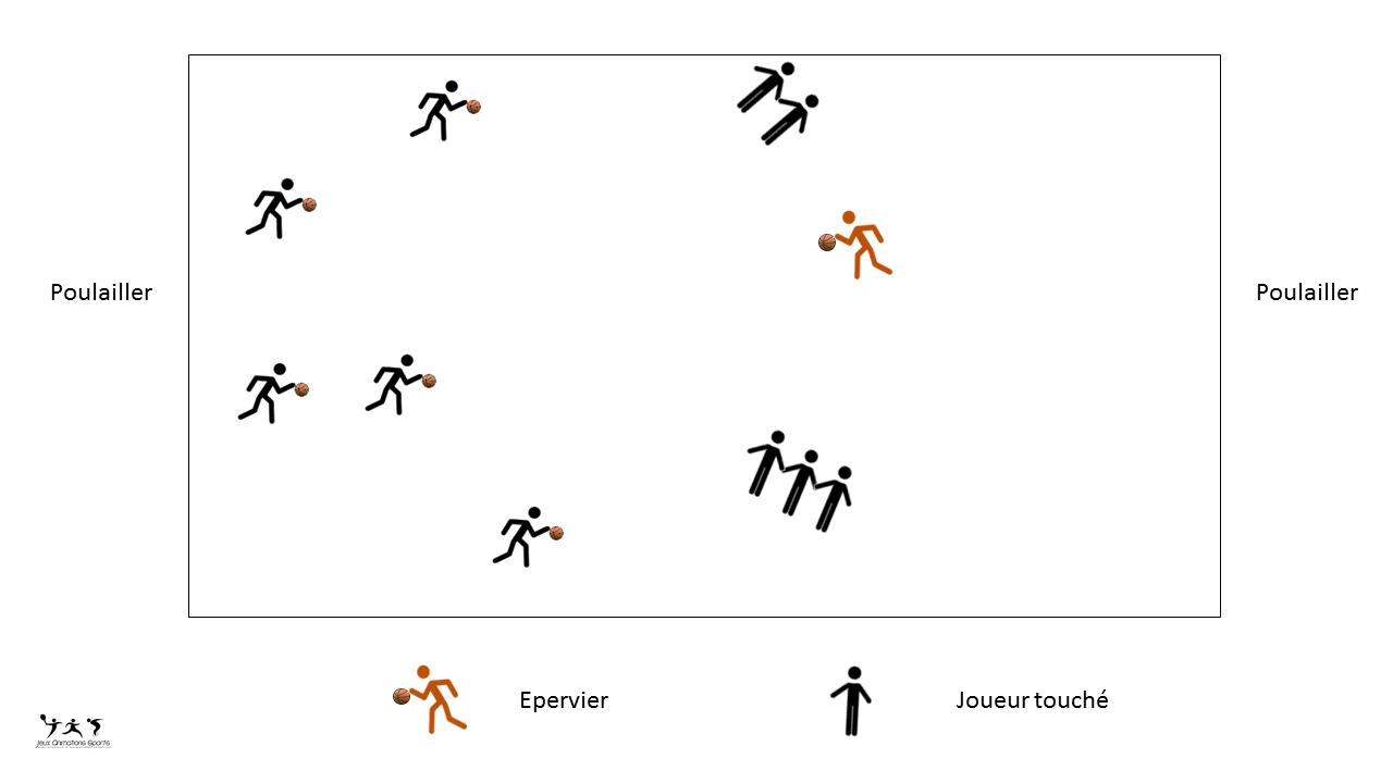 Jeu L'épervier Version Basket - Travail Du Dribble Au Basket destiné Jeux Collectifs Cycle 3 Sans Ballon