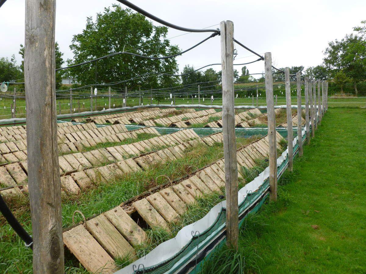 Journée Découverte De L'élevage D'escargots - Association concernant Elevage Escargot