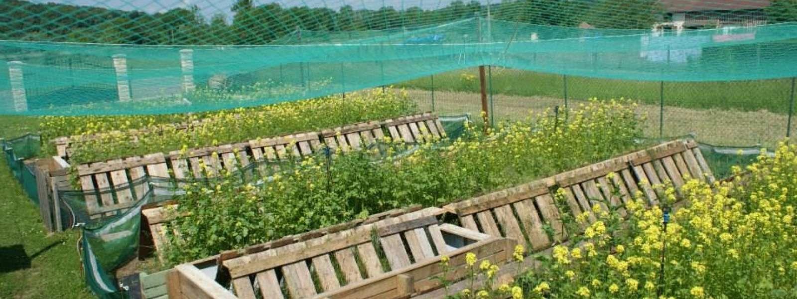 La Coquille Sivrotine : Élevage D'escargots À Sivry-Sur-Meuse dedans Elevage Escargot