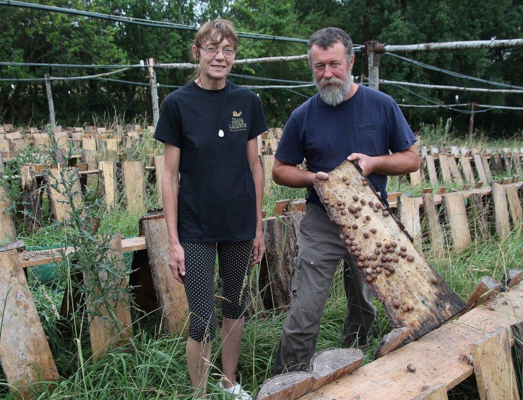 La Ferme Aux Escargots De François Et Florence – Le Petit pour Elevage Escargot