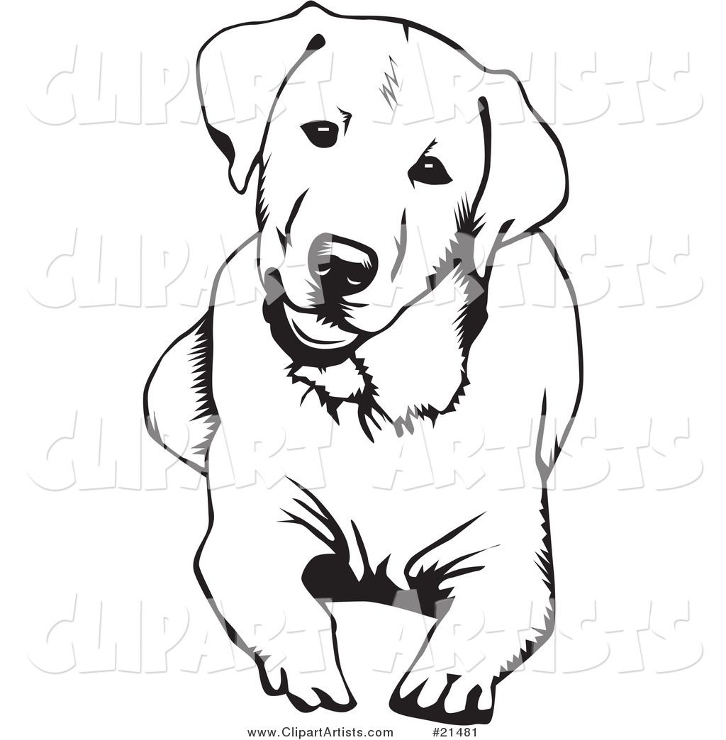 Labrador Coloring Pages - Google Search | Dessin De Chien destiné Coloriage Labrador