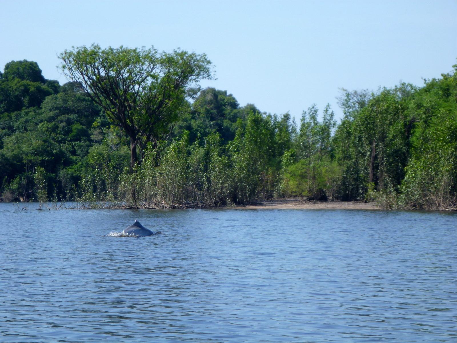 L'amazonie (10/10-17/10) | Vagabondages Australs intérieur Dauphin Amazonie