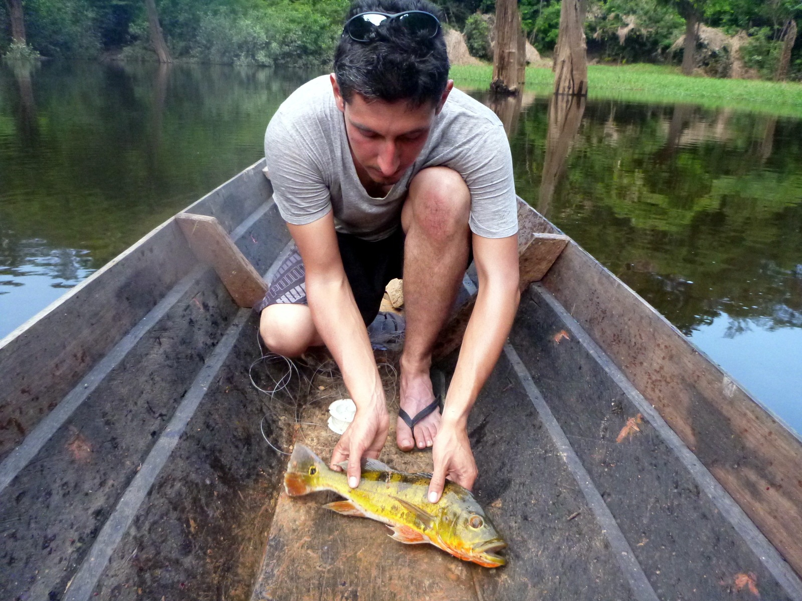 L'amazonie (10/10-17/10) | Vagabondages Australs pour Dauphin Amazonie