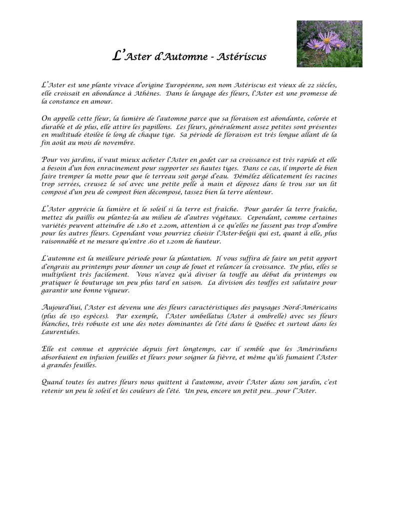 L`aster Ou Marguerite D`automne destiné Caractéristiques De L Automne
