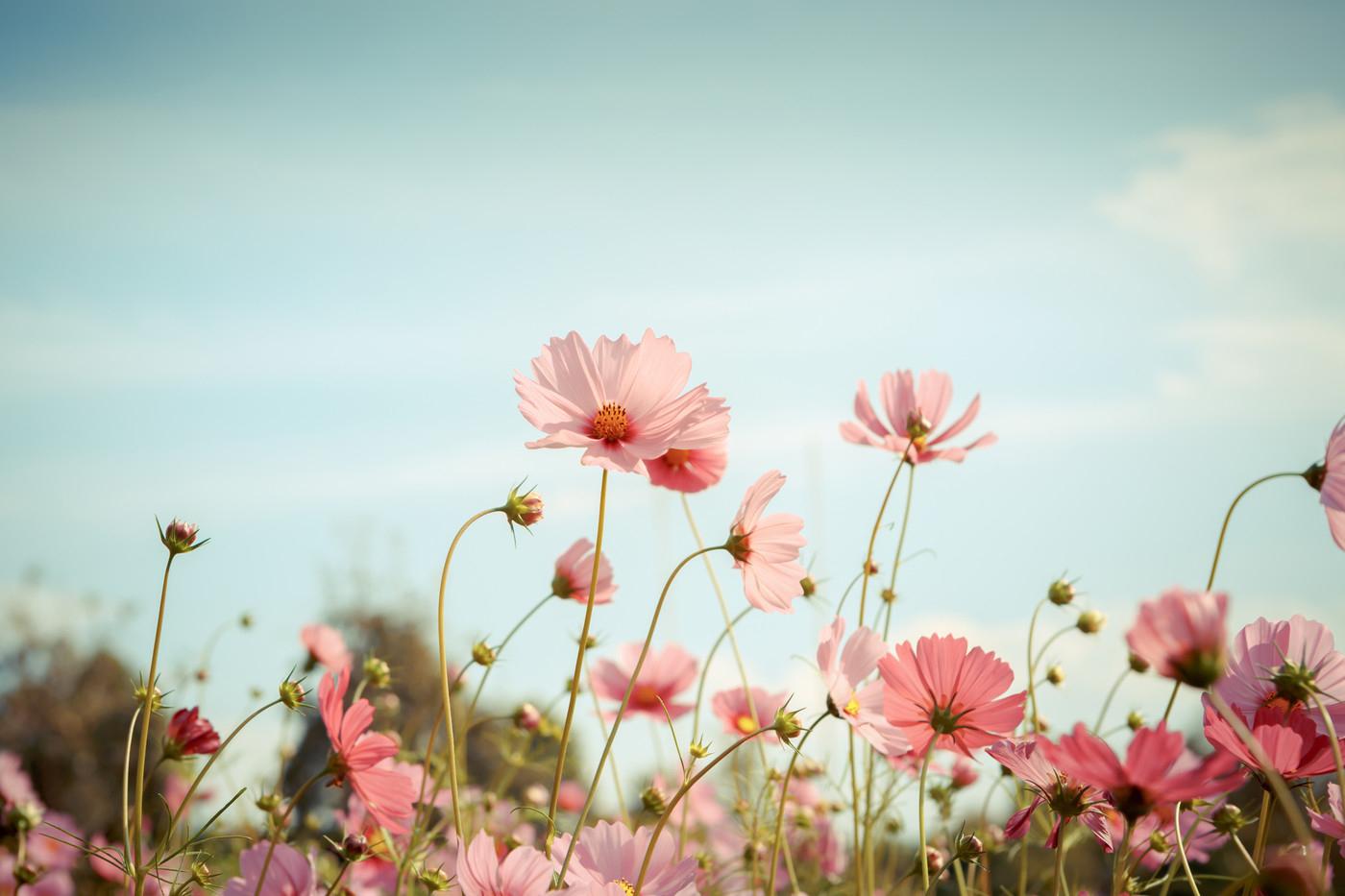 Le Printemps Arrive, Vite, Des Fleurs… intérieur Fleur Qui Pousse Au Printemps