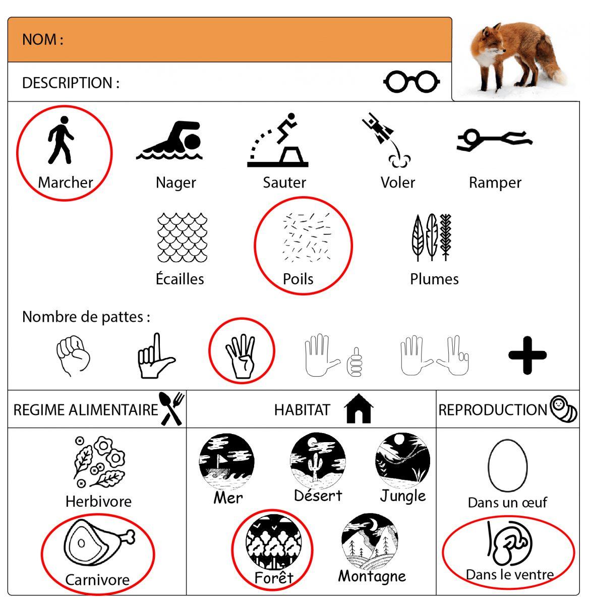 Le Renard Roux : Fiche Pédagogique Cycle 1, Petite pour Fiche Pédagogique Les 5 Sens