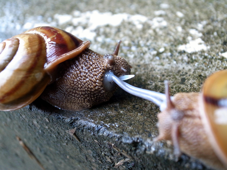 L'élevage D'escargots : Un Outil Pédagogique Et Gastronomique intérieur Elevage Escargot