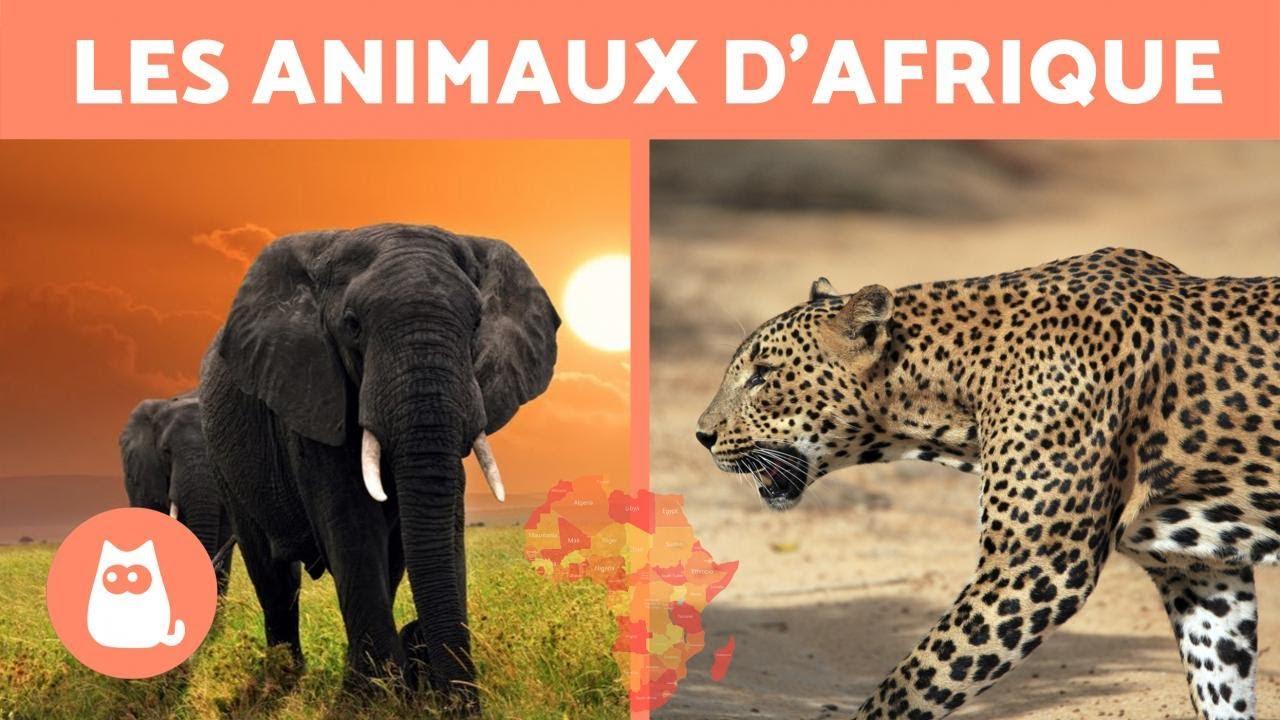 Les Animaux D'afrique - 10 Animaux Sauvages De La Savane Africaine intérieur Animaux Sauvages De L Afrique