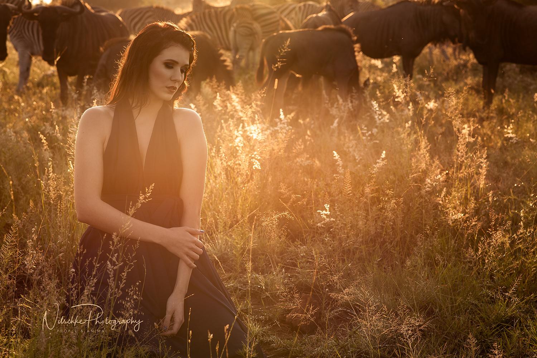 Les Animaux Sauvages De L'afrique Du Sud - Nitschke Photography tout Animaux Sauvages De L Afrique
