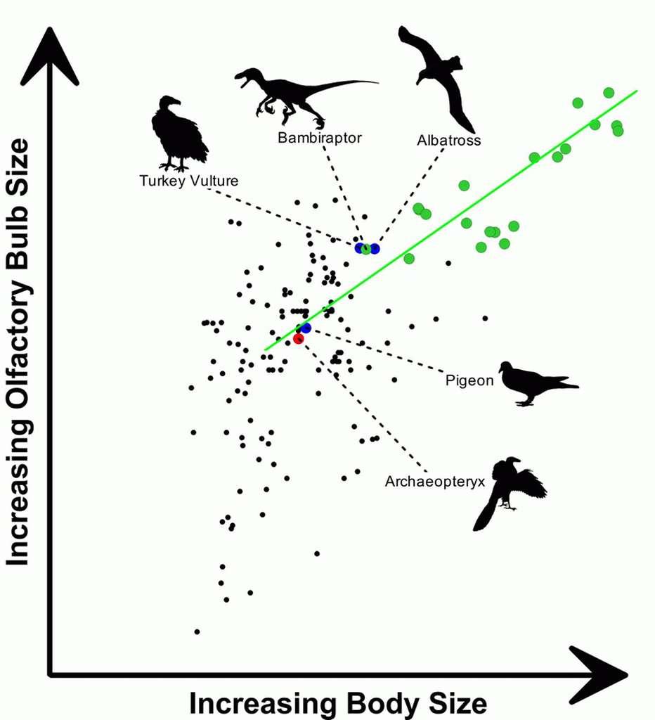 Les Dinosaures Ont Donné Leur Odorat Aux Oiseaux encequiconcerne Sens Olfactif