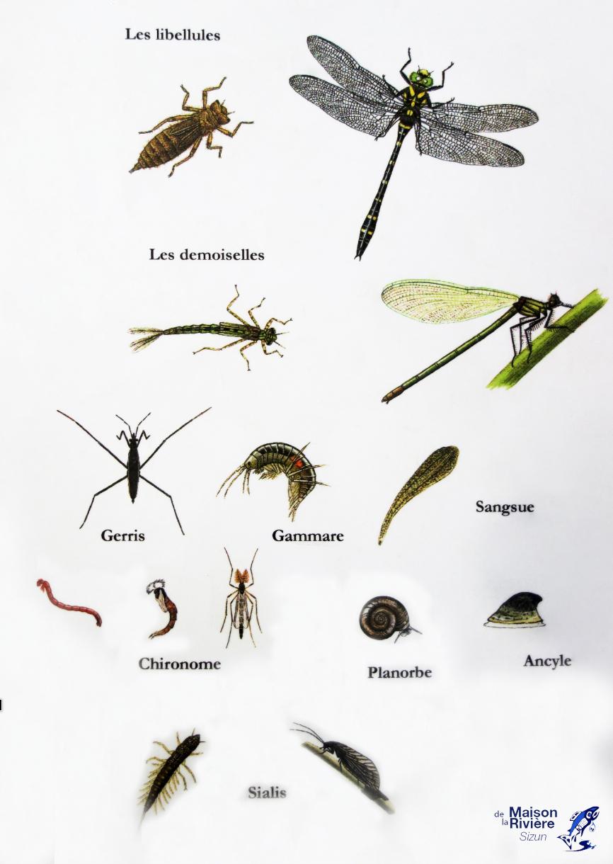 Les Insectes Aquatiques - Mouches-De-Peche.overblog à Les Noms Des Insectes