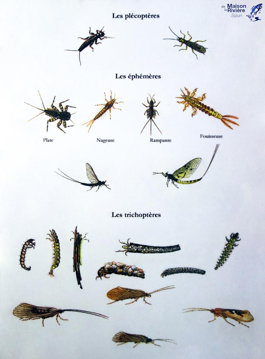 Les Insectes Aquatiques - Mouches-De-Peche.overblog avec Les Noms Des Insectes