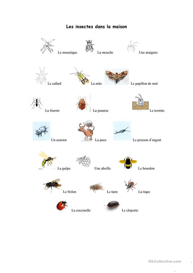 Les Insectes Dans La Maison - Réactualisé - Français Fle destiné Les Noms Des Insectes