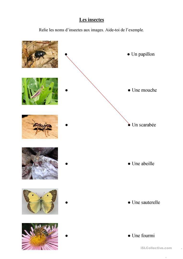Les Insectes - Français Fle Fiches Pedagogiques tout Les Noms Des Insectes