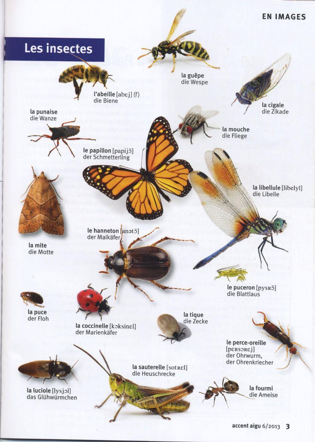 Les Insectes | Insectes, L'éducation Française, Abeille encequiconcerne Les Noms Des Insectes