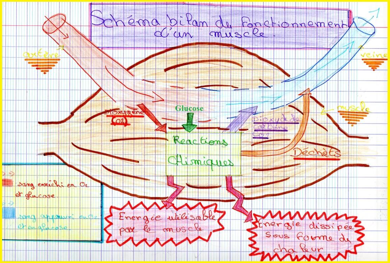 Les Modifications Du Corps Pendant Un Effort | Vive Les Svt ! encequiconcerne Leçon Respiration Cm1