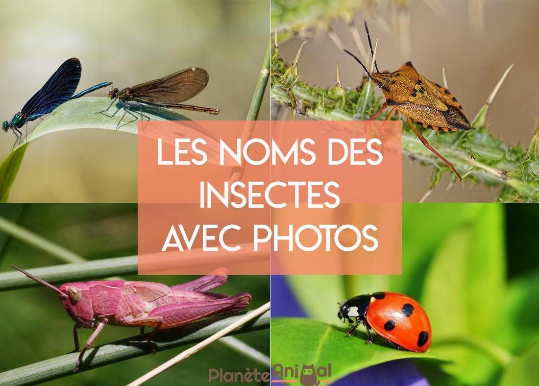 Les Noms Des Insectes Avec Photos - Caractéristiques Et Liste dedans Les Noms Des Insectes