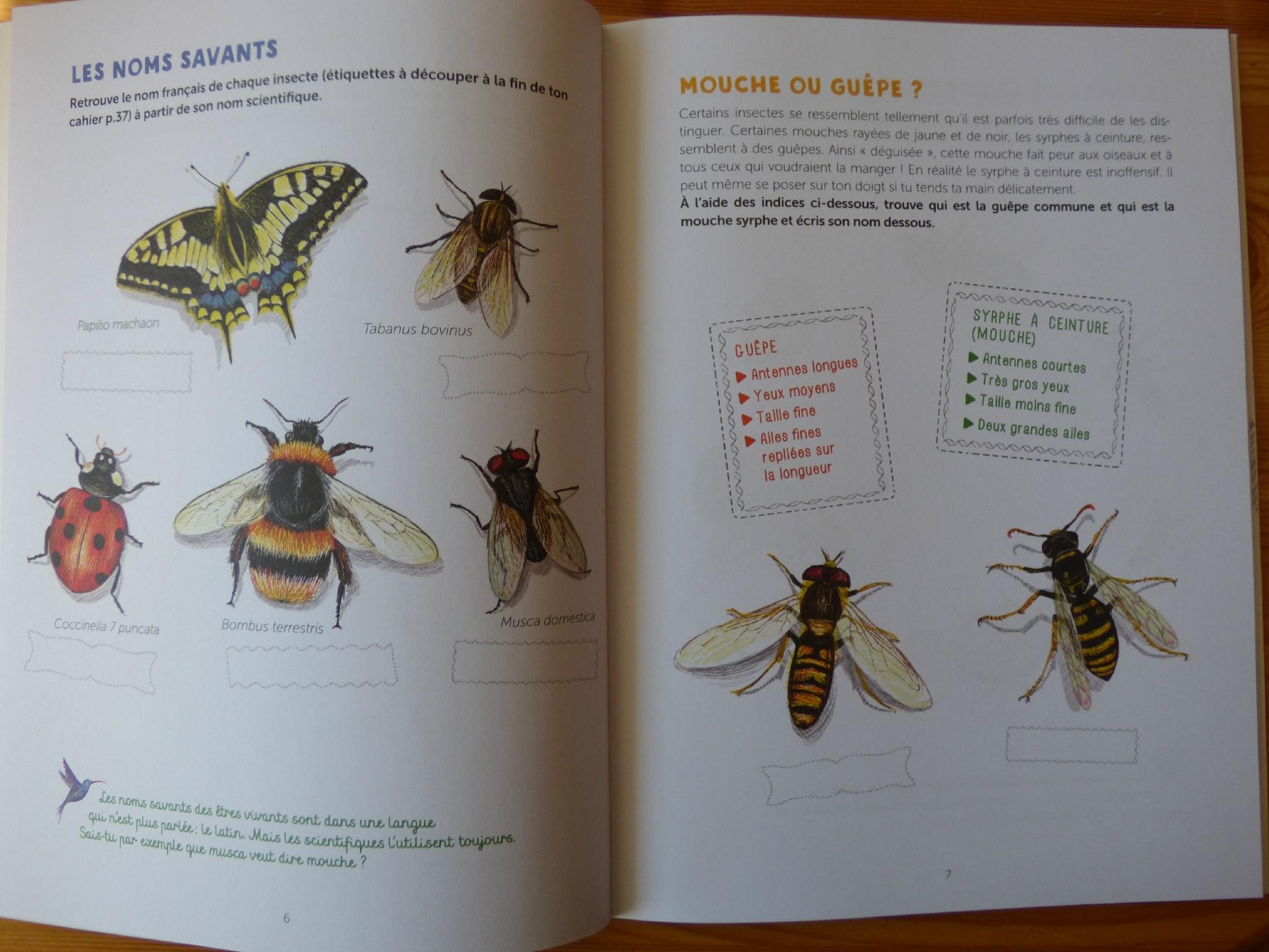 Les Petits Colibris De La Nature - Ressources Pour S'amuser serapportantà Les Noms Des Insectes