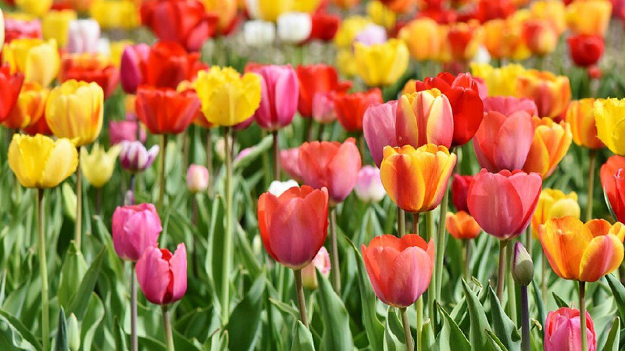 Les Plus Belles Fleurs Du Mois De Mai | Éclosion destiné Fleur Qui Pousse Au Printemps